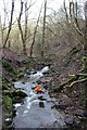 SJ9894 : Hurst Clough Brook by Dave Dunford