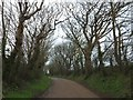 SW8551 : Tree-lined road at Pengelly by David Smith