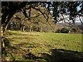 SX7681 : Woodland edge near South Harton by Derek Harper