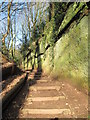 SJ4874 : Footpath in Helsby Quarry by Sue Adair