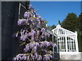 SD4974 : Wisteria, Leighton Hall by Barbara Carr