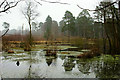 TQ0758 : Pond at Ockham Common, Surrey by Peter Trimming