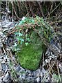 NS4074 : Dumbarton Rock: War Department boundary stone no. 5 by Lairich Rig