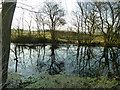 TL7817 : Field corner pond by Robin Webster