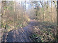 SE7486 : Track  through  Spring  Bank  Wood by Martin Dawes