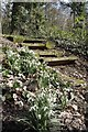 TQ5891 : Snowdrops &amp; Steps by Glyn Baker