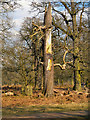 SJ7387 : Dunham Massey Deer Park by David Dixon