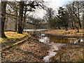 SJ7387 : The Island Pool, Dunham Massey Park by David Dixon