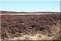 NJ1852 : Grouse Moor by Anne Burgess
