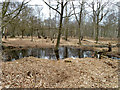 TQ4399 : Small pond, Epping Forest by Robin Webster