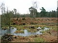 SU6164 : Wet flush, Padworth Common Local Nature Reserve by Simon Mortimer