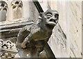 TR1557 : Gargoyle, Canterbury Cathedral by J.Hannan-Briggs