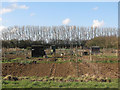 TL4164 : Oakington: allotments and windbreak by John Sutton