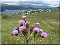 NN0972 : Fort William: thistle at Blarmachfoldach by Chris Downer