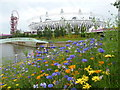 TQ3784 : Stratford: wildflowers at the Olympic Park by Chris Downer