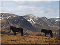 NY4704 : Fell ponies above Kentmere by Karl and Ali