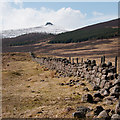NO6486 : Remains of a dyke in Glen Dye by Nigel Corby