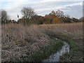 TL4915 : Sawbridgeworth Marsh Nature Reserve by Roger Jones
