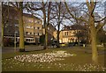 SE2955 : Crocuses, Low Harrogate by Derek Harper