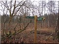 NO0440 : Signpost, Birnam Woods by Richard Webb