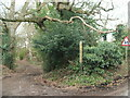 SJ8577 : Bridle path on Artists Lane by Raymond Knapman