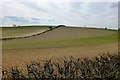 SK6258 : Fields with Hedge by David Lally
