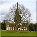 SK6274 : A tree in front of the chapel at Clumber Park by David Lally