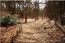 TL1947 : RSPB reserve woodland by Richard Croft
