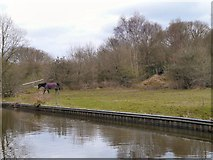 SJ9493 : Grazing by the Peak Forest Canal by Gerald England