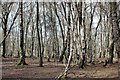 SJ5052 : Bickerton Woodland by Jeff Buck