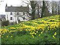 TA1063 : Spring display, Burton Agnes by Pauline Eccles