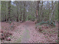 TL8513 : Path in Shut Heath Wood, Little Braxted  by Roger Jones