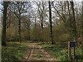 TQ1517 : Track, Capite Wood by Simon Carey