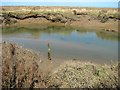 TF9644 : Stiffkey saltmarsh in spring by Evelyn Simak