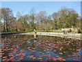 SD5908 : The Lily Pond, Haigh Country Park by David Dixon