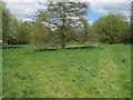 TL6730 : Piper's Meadow, Great Bardfield by Roger Jones