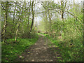 TL6233 : Track in West Wood Nature Reserve by Roger Jones