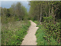 TM0321 : Path in Wivenhoe Wood by Roger Jones