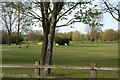 SJ6499 : Golf course at Pennington Flash by Bill Boaden