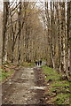 SD1990 : Footpath at the edge of Low Park by Rob Noble