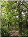 TQ3971 : Downham Woodland Walk by Derek Harper