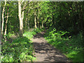 TM0221 : Tree lined footpath, Rowhedge by Roger Jones