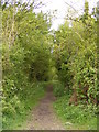 TM3688 : The Angles Way footpath to Rectory Lane &amp; New Road by Adrian Cable