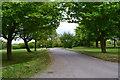 TQ4161 : Ashmore Lane, Leaves Green by David Martin