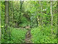 SK3398 : Footbridge at Westwood Bottom by Jonathan Clitheroe