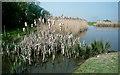 TL4492 : Pond at Stonea Camp by Kim Fyson