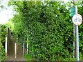 SU9684 : Beeches Way (38) by Shazz