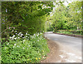 TM2998 : Hunstead Lane, Kirstead by Adrian Cable