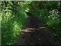 SU8874 : Church Lane by Alan Hunt