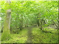 TQ5033 : High Weald Landscape Trail in Legg Wood by David Anstiss